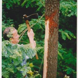 taglio bosco macallè 1996 001